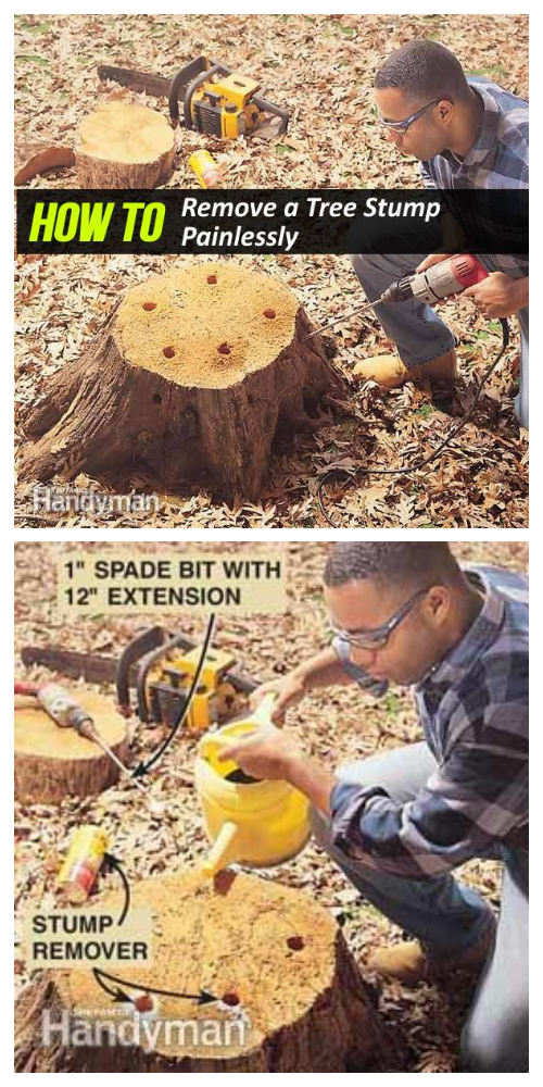 Easiest Way to Remove a Tree Stump Yourself Painlessly + Video