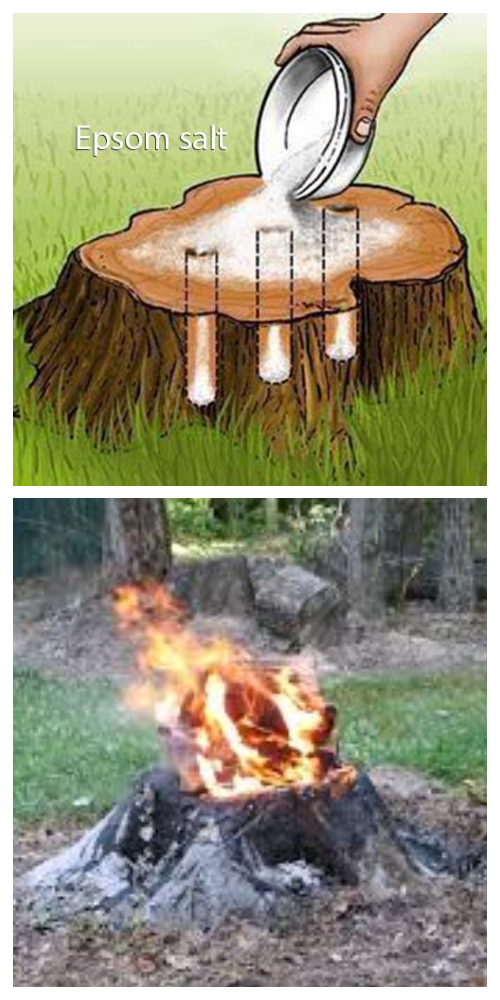 Easiest Way to Remove a Tree Stump Yourself Painlessly + VideoEasiest Way to Remove a Tree Stump Yourself Painlessly + Video