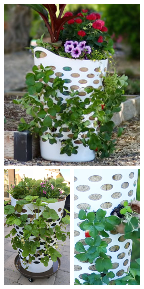Vertical Laundry Basket Strawberry Planter DIY Tutorial + Video